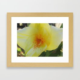 Yellow Canna Lily in Bloom Framed Art Print