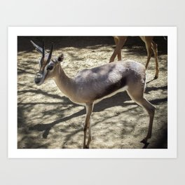 three legged deer Art Print