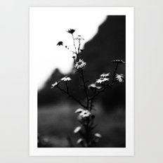 Winter Blooms Art Print