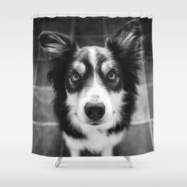 Tri-coloured border collie. Shower Curtain