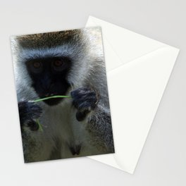 Vervet Monkey Stationery Cards