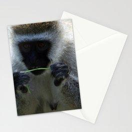 Vervet Monkey Stationery Cards
