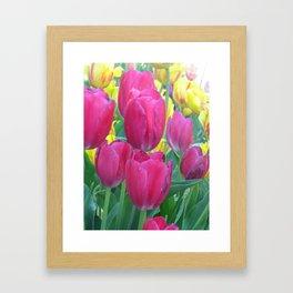 Sweet Spring Tulips Framed Art Print