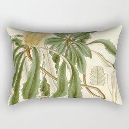 Banksia integrifolia (Coast Banksia) 1827 Rectangular Pillow