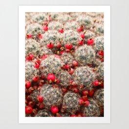 Berry Cactus  Art Print