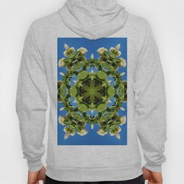 Hydrangea kaleidoscope - white flowers, green leaves, blue sky 161134 k6 Hoody