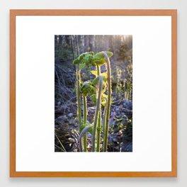 Forest Magic - Alex's Ferns Framed Art Print