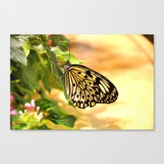Briefly Beautiful Canvas Print