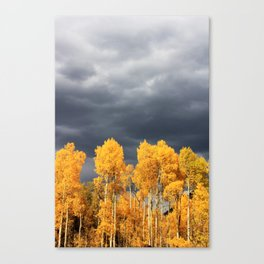 Golden Aspens and an Impending Storm Canvas Print