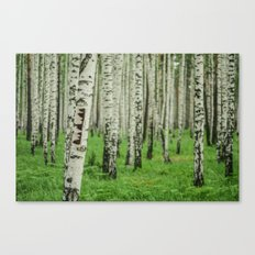 Forrest of white trees Canvas Print
