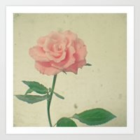 blush Art Prints featuring Blush by Cassia Beck