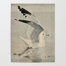Vintage Illustration of a Seagull (1902) Poster