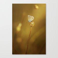 Azurée doré Canvas Print