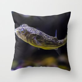 Striped Redeye Puffer fish Throw Pillow