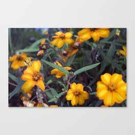 Small Orange Flowers Canvas Print