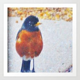 Robin in the Rain Art Print