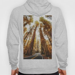 red woods forest in california Hoody