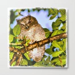 Squinting Owl Metal Print