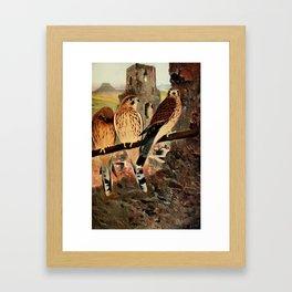 Kuhnert, Friedrich Wilhelm (1865-1926) - Wild Life of the World 1916 v.1 (Kestrel) Framed Art Print