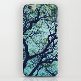 Rain Tree iPhone Skin