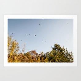 red tailed hawks Art Print