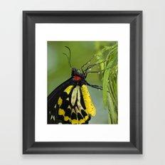 Butterfly Raindrops Framed Art Print