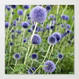BLUE FLOWERHEADS - Botanical Garden Canvas Print
