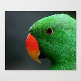 Eclectus Parrot Male Canvas Print