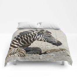 Zebra_2014_1002 Comforters