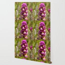 Purple Owl's Clover Wallpaper