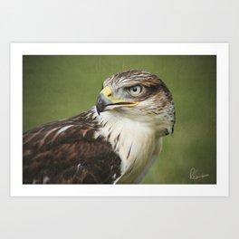 Red-tailed Hawk II Art Print
