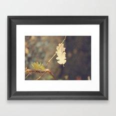 Leaf. Framed Art Print