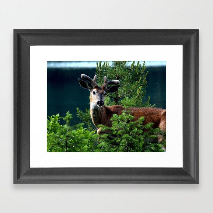 Velvet Deer Framed Art Print By Ami_with_an_i