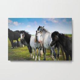 Horses Horses 4 Metal Print