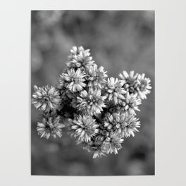 Black and White Floral Tiny Cobwebs on Flowers - Macro Close Up Poster