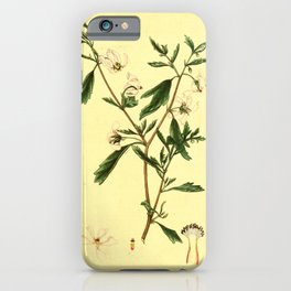 Flower Reflex flowered Mallow malva reflexa iPhone Case