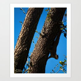 Sneaky Squirrel Art Print