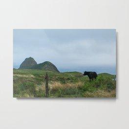 Maui cow Metal Print