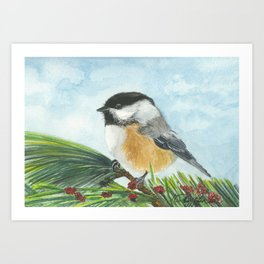 Chickadee on Pine Branch Art Print