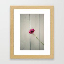 Beautiful cornflower Framed Art Print