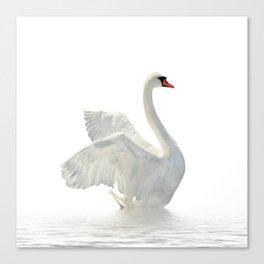 WHITE ON WHITE-BEAUTIFUL SWAN Canvas Print