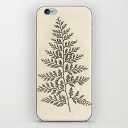 Naturalist Fern iPhone Skin