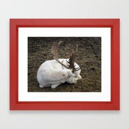 White Fallow Deer Framed Art Print