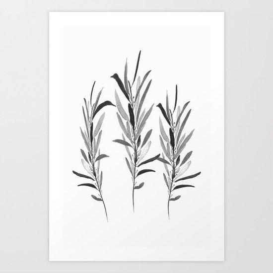 Eucalyptus Branches Black And White Art Print