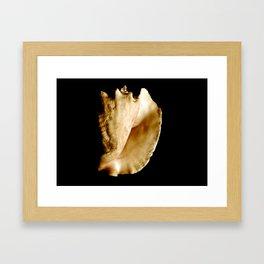 Shell Portrait 3 Framed Art Print