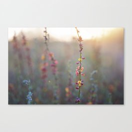 Wildflowers at Sunse Canvas Print