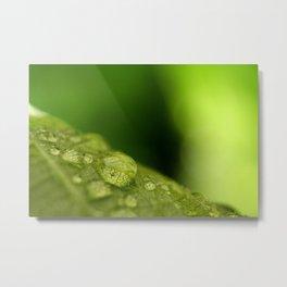 Green Leaf with Rain Drops Macro Photography Metal Print