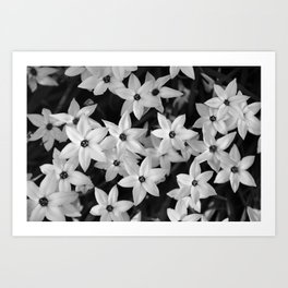 All the Stars.... Art Print