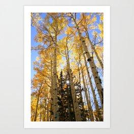 Autumn Aspen Art Print
