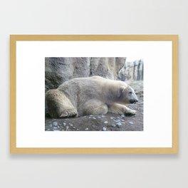 Eric the polar bear Framed Art Print